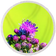 Round Beach Towel featuring the photograph Thistle June 2016.  by Leif Sohlman