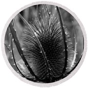 Round Beach Towel featuring the photograph Thistle by Keith Elliott