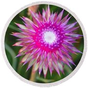 Thistle With Personality Round Beach Towel by Shirley Moravec