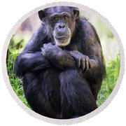 Thoughtful Chimpanzee  Round Beach Towel