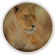 Thoughtful Lioness - Square Round Beach Towel