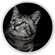 Round Beach Towel featuring the photograph Thoughtful Tabby by Chriss Pagani