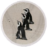Three African Penguins Round Beach Towel
