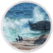 Three Cormorants At Monument Cove, Acadia National Park Round Beach Towel