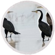 Three Cormorants Round Beach Towel by Werner Padarin