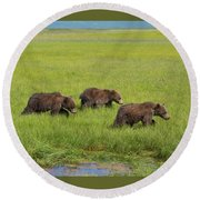 Three Cubs Moving On Round Beach Towel