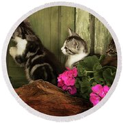 Three Cute Kittens Waiting At The Door Round Beach Towel