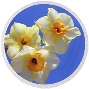 Round Beach Towel featuring the photograph Three Daffodils by Judy Vincent
