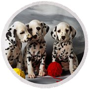 Three Dalmatian Puppies  Round Beach Towel