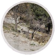Dry Mountain Slope With Three Deer Round Beach Towel