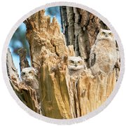 Three Great Horned Owl Babies Round Beach Towel