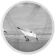 Round Beach Towel featuring the photograph Three Hungry Little Guys by T Brian Jones