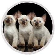 Three Kitty Of Breed Mekong Bobtail On Black Background Round Beach Towel