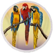 Three Macaws Hanging Out Round Beach Towel