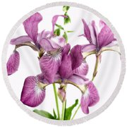 Three Mauve Japanese Irises Round Beach Towel