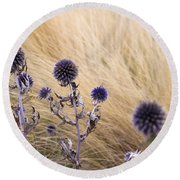 Round Beach Towel featuring the photograph Three Purple Echinops by Helga Novelli