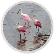 Three Roseate Spoonbills Square Round Beach Towel by Carol Groenen