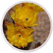 Three Yellow Cactus Flowers Round Beach Towel