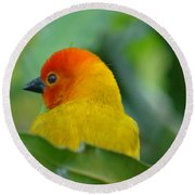 Through A Child's Eyes - Close Up Yellow And Orange Bird 2 Round Beach Towel