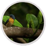 Tickell's Blue Flycatcher Round Beach Towel