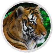Tiger Contemplation Round Beach Towel
