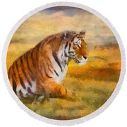Tiger Dreams Round Beach Towel