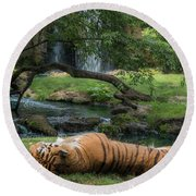 Tiger In Paradise Round Beach Towel
