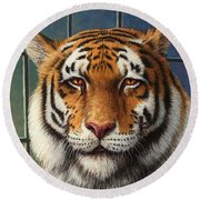 Tiger In Trouble Round Beach Towel