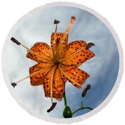 Tiger Lily In A Shower Round Beach Towel