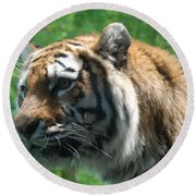 Round Beach Towel featuring the photograph Tiger Profile by Richard Bryce and Family