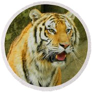 Round Beach Towel featuring the photograph Tiger Stare by Sandi OReilly
