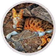 Round Beach Towel featuring the photograph Tiger Tiger Burning Bright by Leigh Kemp