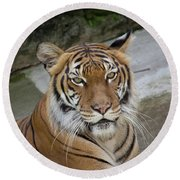 Tiger Tiger Round Beach Towel by John Black