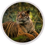 Round Beach Towel featuring the photograph Tigers Beauty by Scott Carruthers