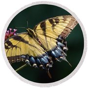 Round Beach Towel featuring the photograph Tigress And Verbena by Byron Varvarigos