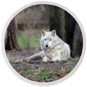 Round Beach Towel featuring the photograph Timber Wolf by Andrea Silies