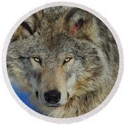 Timber Wolf Portrait Round Beach Towel
