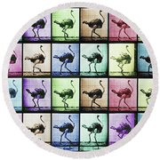 Time Lapse Motion Study Ostrich Color Round Beach Towel