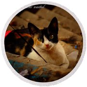 Time Spent With Cats. Round Beach Towel by Salman Ravish