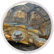 Timothy The Giant Tortoise Round Beach Towel