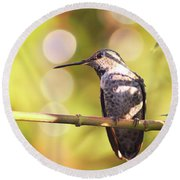 Tiny Bird Upon A Branch Round Beach Towel