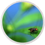 Tiny Fly On Leaf Round Beach Towel