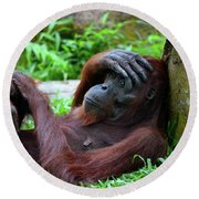 Tired Female Orangutan Ape Rests Against Tree With Hand On Her Head Round Beach Towel