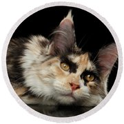 Tired Maine Coon Cat Lie On Black Background Round Beach Towel