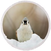 Tufted Titmouse In Snow Round Beach Towel