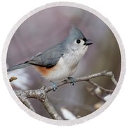 Titmouse Song - D010023 Round Beach Towel by Daniel Dempster