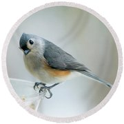 Titmouse With Walnuts Round Beach Towel