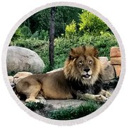Tomo, The King Of Beasts Round Beach Towel by Laurel Talabere