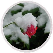 Too Soon Winter - Red Rose  Round Beach Towel by Shirley Heyn