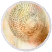 Top Down View Of Spiral Sea Shell Round Beach Towel
